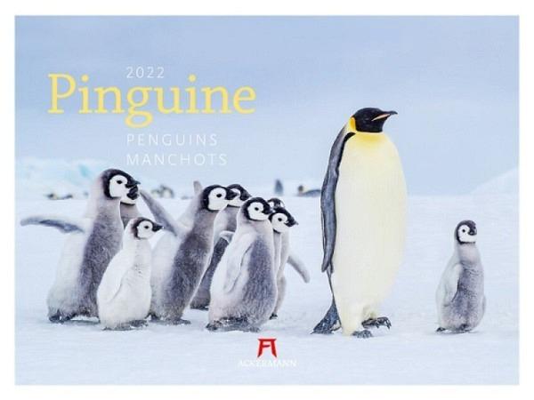 Kalender Pinguine 45x33cm
