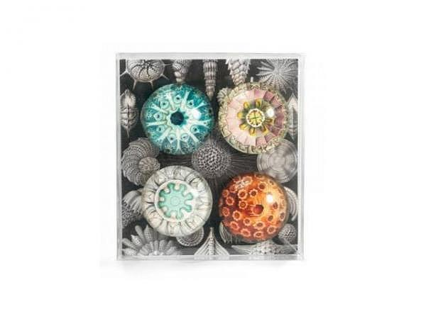 Magnet Trendform EYE-Magnete AQUARIUS 4er Set<br>