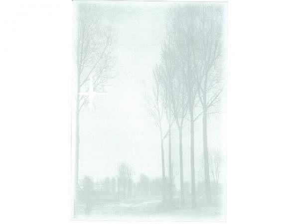 Papier Artoz Design Trauer Birken 5Stk, A4 90g/qm