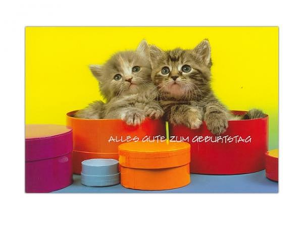 Geburtstagskarte ABC Katzenbabys 11,5x17cm, gelbe