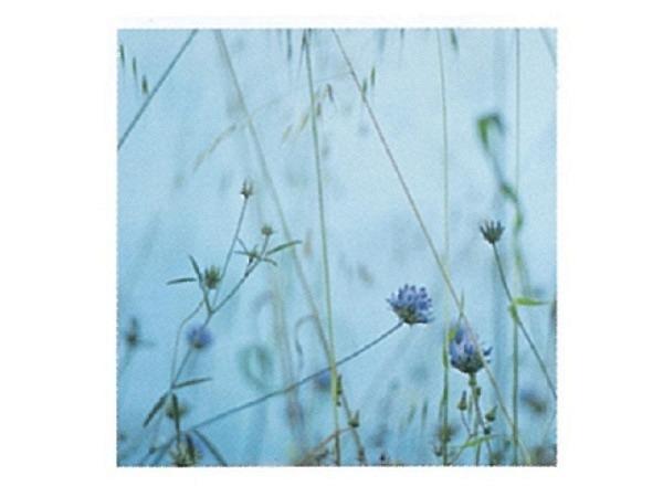 Karte Art Bula 12,2x12,2cm blaue Blüten mit blauem Hintergrund