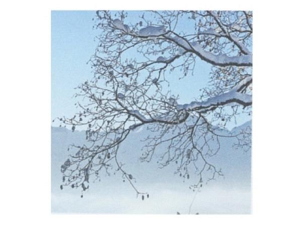 Karte Art Bula 12,2x12,2cm Ast mit Schnee