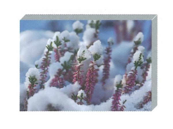 Kartenbox Art Bula Set Blätter und Blüten schneebedeckt