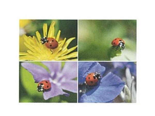 Postkarte Art Bula 10,5x14,8cm vier Bilder von Marienkäfer