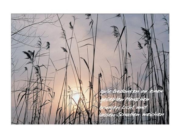 Trauerkarte Art Bula 12,2x17,5cm Schilf im trüben Sonnenaufgang, mit Text, Doppelkarte mit Fotodruck, unbedrucktem Einlageblatt und Couvert