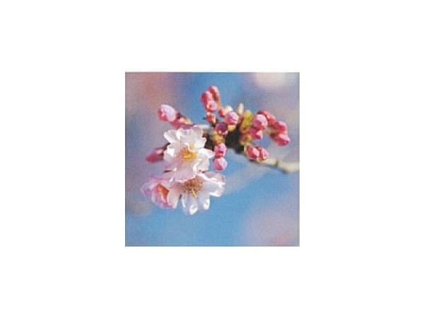 Karte Art Bula 12,2x12,2cm Fruchtblüte  geschlossene Konspen