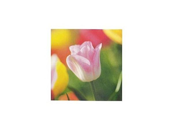 Karte Art Bula 12,2x12,2cm eine rosa farbene Tulpe